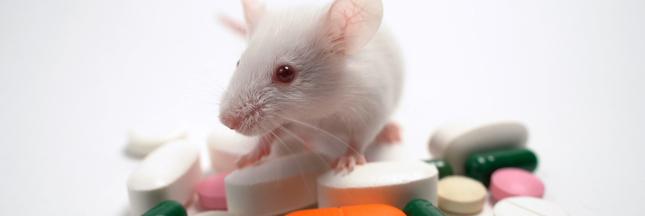 Essais sur les animaux : PETA France appelle à boycotter le Téléthon
