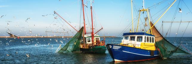 86% des poissons vendus en grande surface proviennent d'une pêche 'non durable'