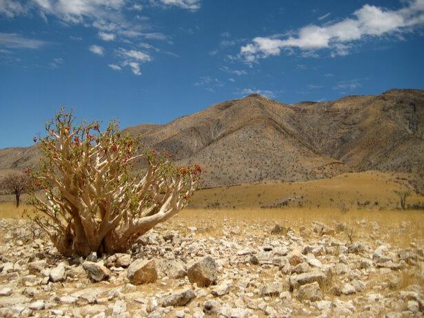 cactus succulentes