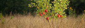 Comment faire germer les noyaux ou  les pépins de fruits?