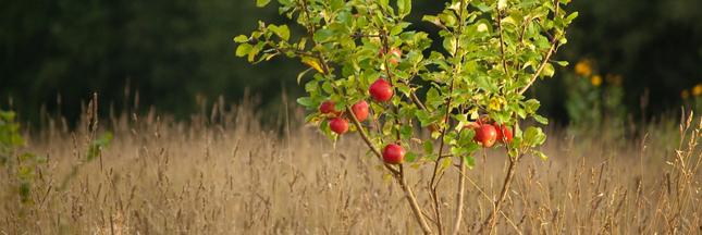 Comment faire germer les noyaux ou  les pépins de fruits ?
