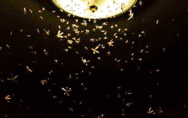 éclairage nocturne