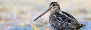 Un quart de la biodiversité française est éteinte ou menacée