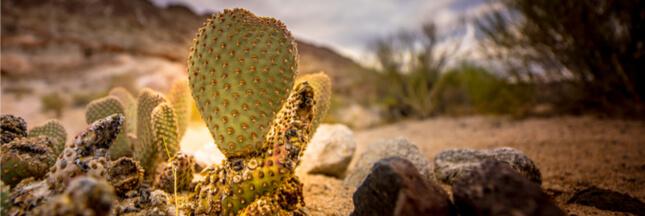 Des surfaces biomimétiques pour récupérer de l'eau potable dans le désert
