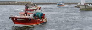 Subventions à la pêche : Bloom attaque l'État en justice