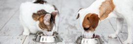Pourquoi du bio dans la gamelle de nos chiens et de nos chats?
