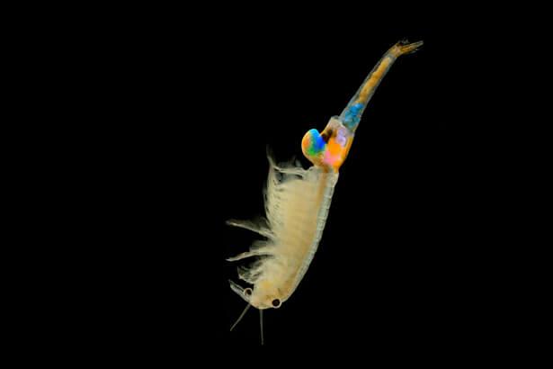 crustaces menaces, espèces menacées en France