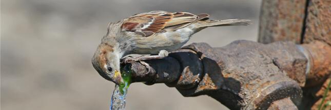 De l'eau chez vous pour les animaux, c'est toute l'année !