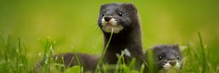 Diaporama : Top 10 des espèces menacées en France