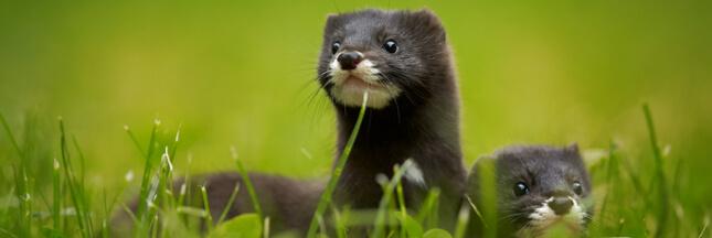 Diaporama: Top 10 des espèces menacées en France
