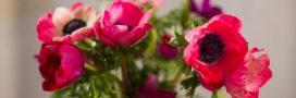 Bouquet de saison: quelles fleurs en hiver?
