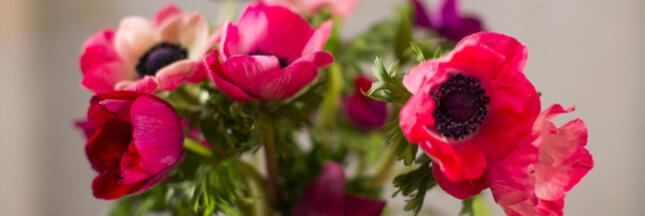 Bouquet de saison : quelles fleurs en hiver ?