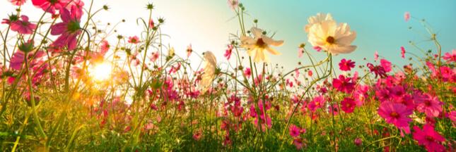Biodiversité: 15% des fleurs sauvages menacées de disparition en France