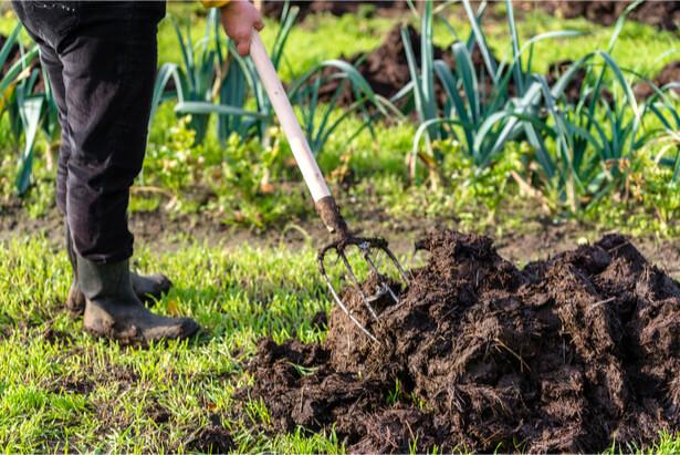 Pour produire plus au potager pensez fumier - Quand mettre du fumier dans son jardin ...