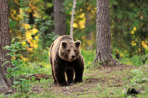 mammiferes menaces, espèces menacées en France