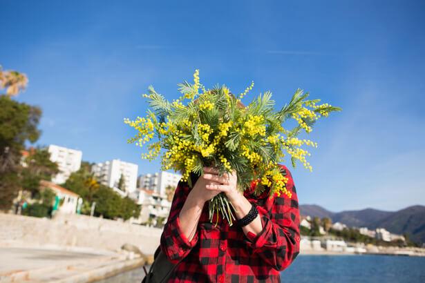 mimosa hiver, fleurs en hiver