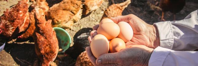 La grande distribution (enfin) soucieuse du bien-être animal ?