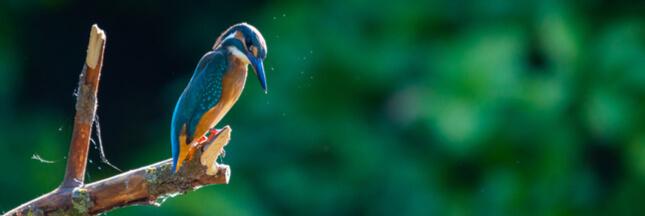 Office français de la biodiversité : un projet qui donne l'avantage aux chasseurs !