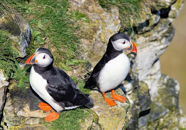 oiseaux menaces, espèces menacées en France