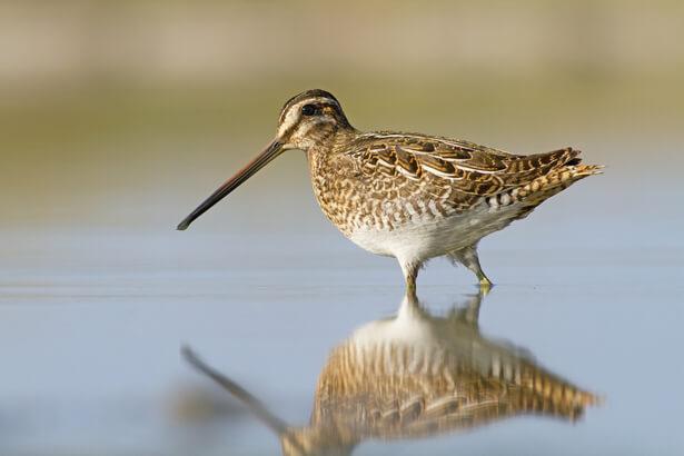 oiseaux menacés, espèces menacées en France
