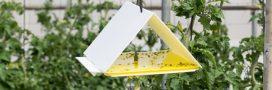 Biocontrôle au potager, comment ça marche?
