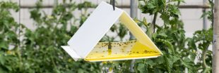 Biocontrôle au potager, comment ça marche ?