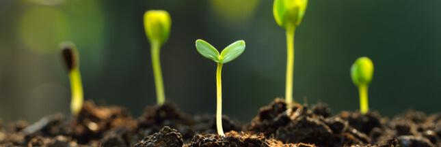 6 conseils d'expert pour réussir ses semis