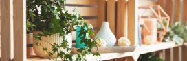10 plantes dangereuses à éviter ou bannir à la maison