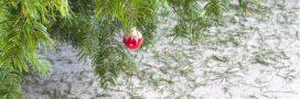 Innovation et recyclage: que faire de nos sapins une fois les fêtes finies