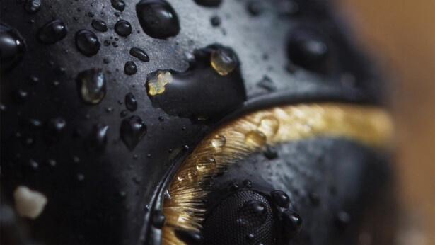 surfaces biomimétiques
