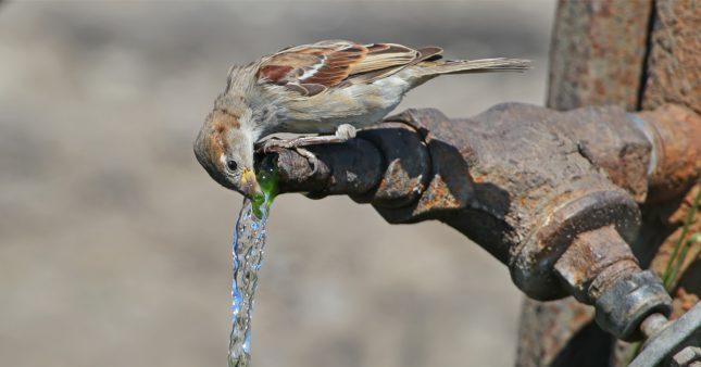 De l'eau chez vous pour les animaux, c'est toute l'année!