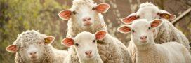 Sélection livre – Lettre Ouverte aux Mangeurs de Viandes – Paul Ariès