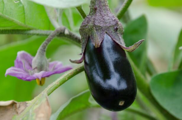 association culture aubergine