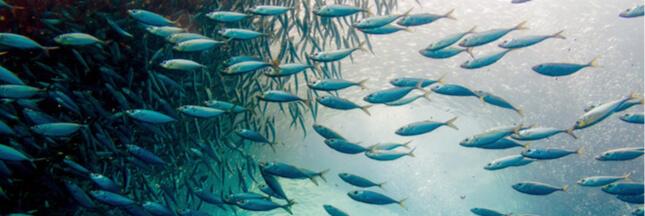 La semaine de la pêche responsable avec MSC et ASC