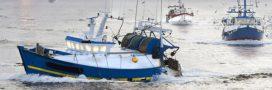 En France, moins d'un poisson sur deux est pêché de façon durable