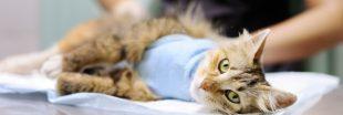 La Ville de Saumur accorde une allocation pour chats