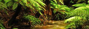 Réchauffement climatique: L'Australie veut planter un milliard d'arbres
