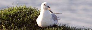 Des composants plastiques découverts jusque dans des oeufs d'oiseaux en Arctique !