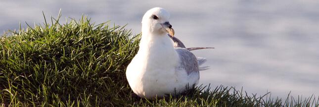 Des composants plastiques découverts jusque dans des oeufs d'oiseaux en Arctique!