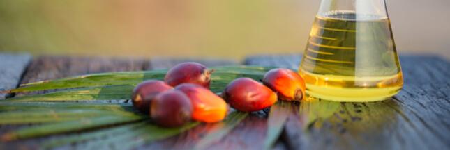 Biocarburants: Bruxelles condamne l'huile de palme mais ménage le soja