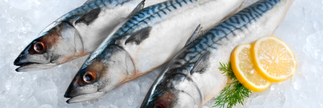 Surpêche : le maquereau de l'Atlantique Nord-Est perd sa certification MSC