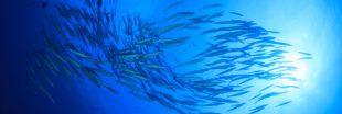 Sondage : Agissez-vous en faveur de la pêche responsable ?