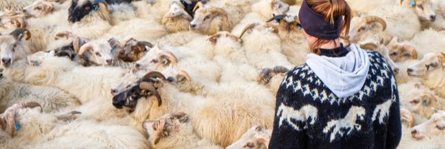 11 bonnes raisons de ne pas porter de laine