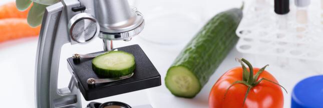 Sécurité alimentaire : la Cour des comptes pointe des failles