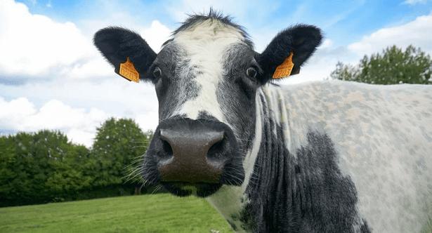 vache salon agriculture
