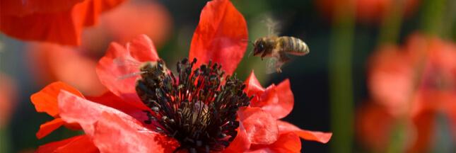 10 fleurs pour le jardin et leurs insectes compagnons