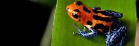 Les espèces menacées peuvent attendre des années avant d'être protégées