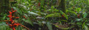 À quelle vitesse une forêt tropicale se régénère-t-elle ?