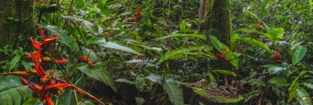 À quelle vitesse une forêt tropicale se régénère-t-elle?