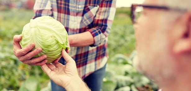 légumes mars